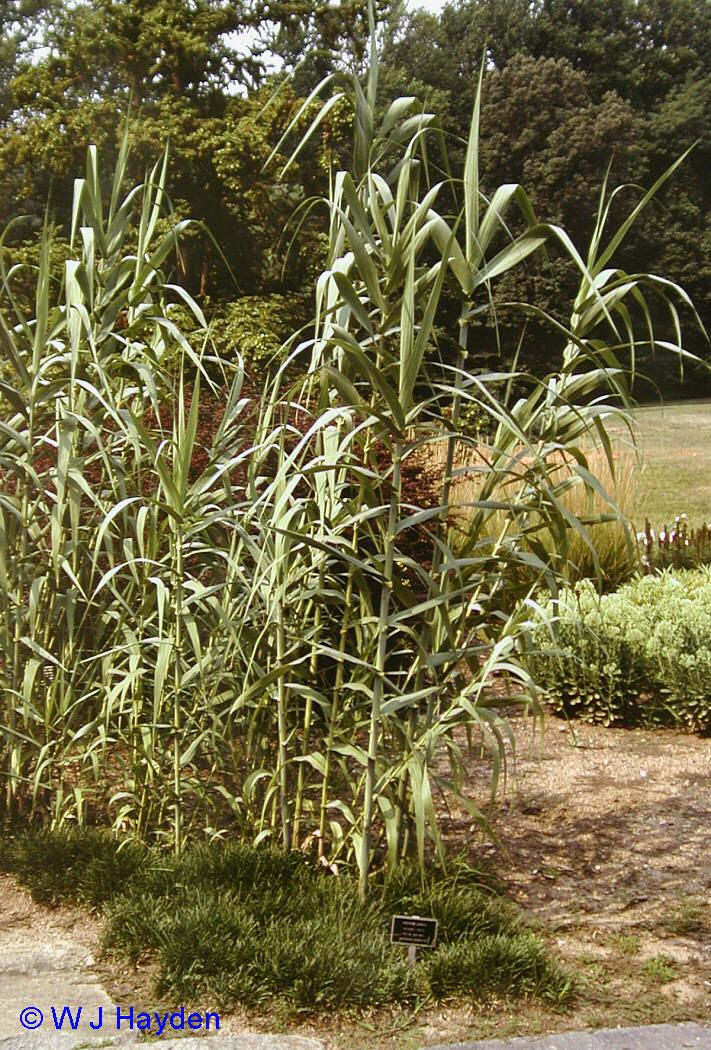 Vegetaci n almenara for Vegetacion ornamental